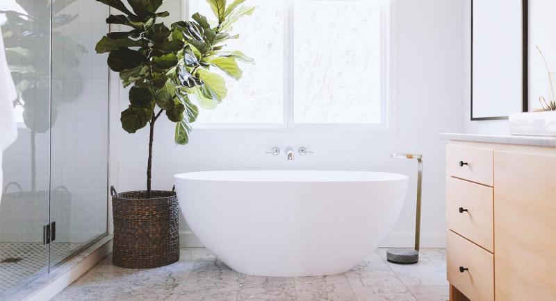 Welche Pflanzen Im Badezimmer Meinbad By Tesa